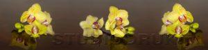 kwiaty 221