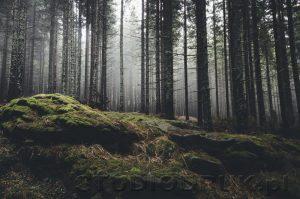 natura 070